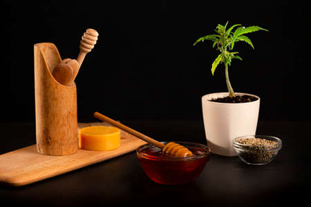 CBD Honey in a bowl, a wooden board, a marijuana plant in a white flowerpot and hemp seeds. The background is black.