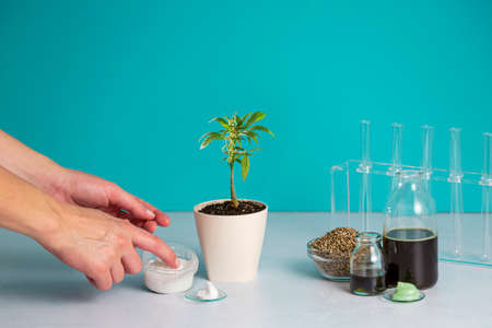 Lubricate CBD hand cream from a small bowl, on the side, there is CBD oil and products, hemp seeds in a bowl, marijuana plant in a flowerpot and test tubes. The background is predominantly blue.