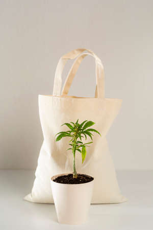 Eco bag with a marijuana plant positioned in front in a white flowerpot, with a white background in. Фото со стока