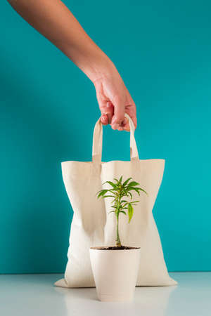 Eco bag with a marijuana plant positioned in front in a white flowerpot, with a blue background. One hand from above is holding an ecological bag.