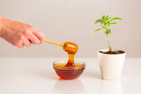 A hand holding a honey dipper, CBD honey itself in small glass bowl and marijuana plant on the side in a white flowerpot.