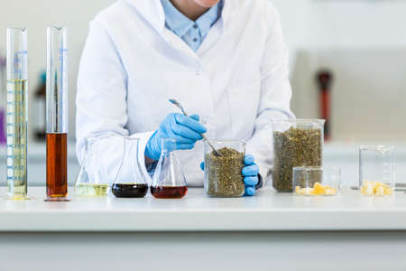 Hands wearing gloves working with marijuana seeds during experiment in laboratory. CBD and CBDa oils and glass tubes are on table and tablet is in backgorund. Healthcare pharmacy from cannabis.
