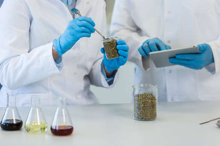Scientist's hands working with marijuana seeds in beaker during experiment in laboratory. CBD and CBDa oils and glass tubes are on table. Healthcare pharmacy from cannabis.