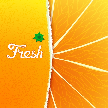 orange peel: Fresh orange. Abstract creative background with any torn peel and the structure of the fruit Illustration