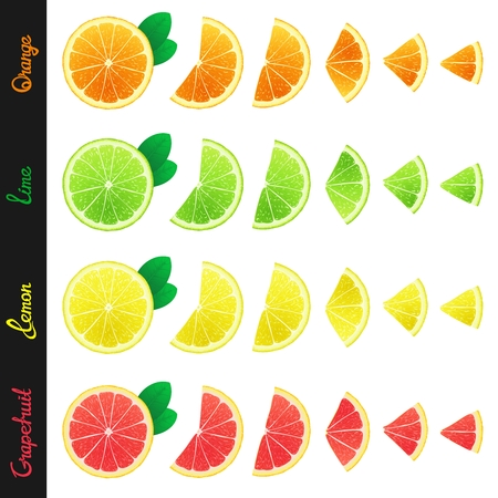 few: Big set of citrus slices of orange, lemon, lime and grapefruit. Isolated design elements