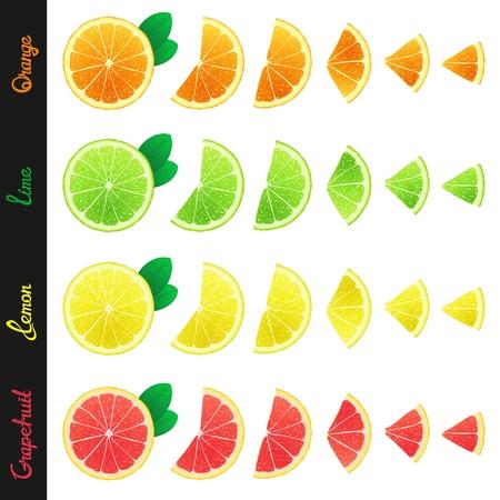lemon lime: Grande insieme di fette di agrumi di arancia, limone, lime e pompelmo. Isolati elementi di design