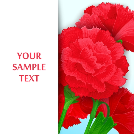 carnations: Just template with bouquet of red carnations and free space for message.