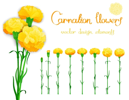 carnations: Vector set isolated of flowers carnations. Bundle of eight unique blossom with the stems and leaves.  In addition, a bouquet of three cloves with shadows.