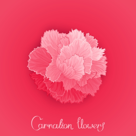 burgeon: Juicy burgeon blossom of carnation. Just picture postcard with a flower. Vector design element Illustration