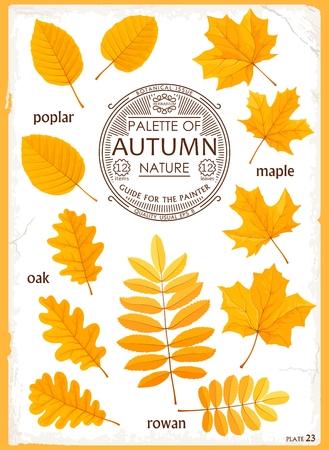 Set of isolated Leaves Autumn Season. Illustration