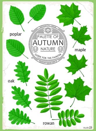 Set of isolated leaves. Illustration