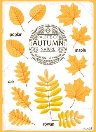 Set of isolated leaves Autumn season. Maple, Oak, Poplar and Rowan. Realistic vector graphics.  Creative design for print, web, etc. Illustration