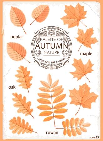 Set cartoon isolated leaves illustration.