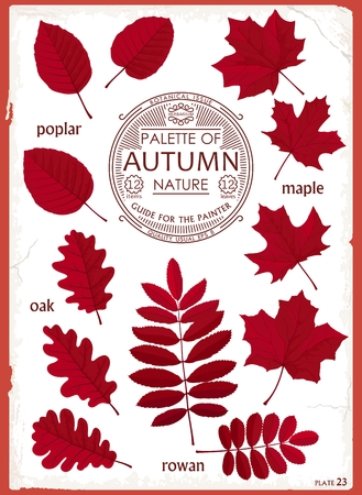 Set of colored leaves different trees. Autumn collection. Creative design for decoration. Vector elements