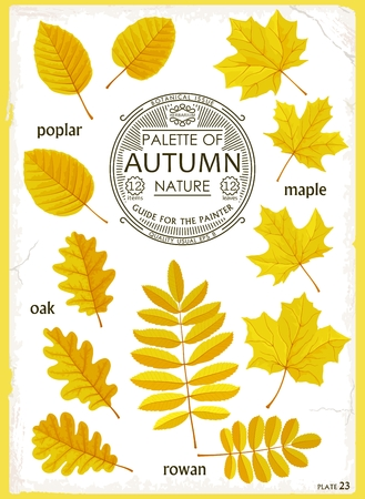 Set of handmade cartoon isolated leaves. Vintage style botanical guide. Creative Vector illustration