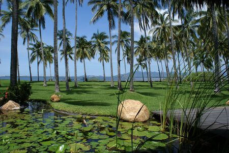 A beautiful garden within a coconut plantation Фото со стока