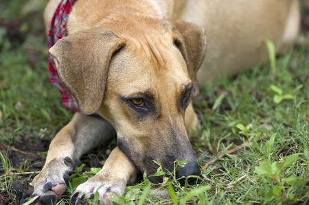 ojos tristes: Un perro triste mira hacia otro lado