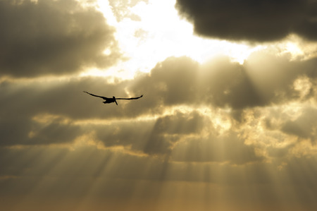 rays of sun: The suns rays break through the clouds as a single soul soars by.