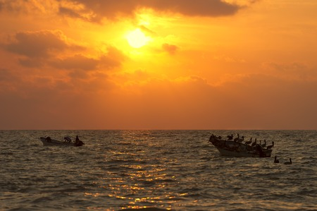 seabirds: Two boats and many seabirds are sihouetted by a beautiful sunset