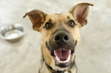 A happy dog is smiling waiting for his bowl to be filled.
