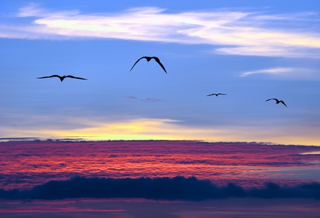 Birds soar above the clouds as the sun sets among a the colorful clouds.
