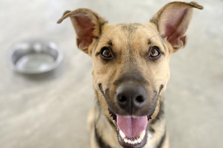 Dog and Bowl mit einem hungrigen glücklich Nahaufnahme von einem lustigen Hund wartet auf sein Essen.