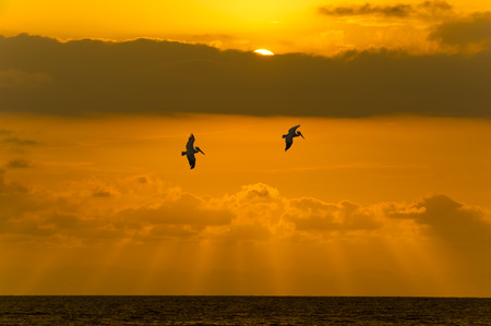 glide: The sun shows itself behind the clouds as two souls glide over the ocean.