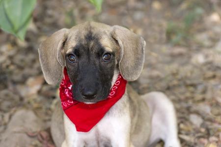 puppy love: Aislado Perrito lindo amor de cerca con grandes ojos y o�dos Floop