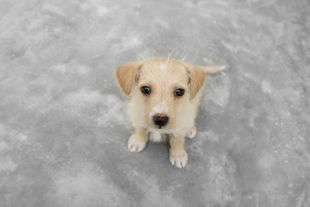 puppy love: Cute puppy love is looking up