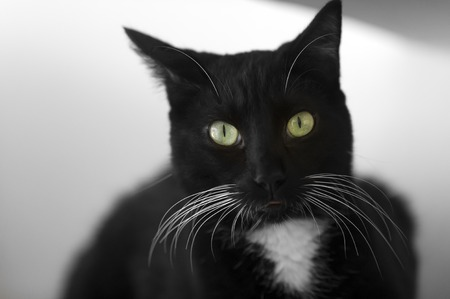whiskers: ABlack Cat with whiskers and big green eyes.