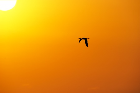 A bird flying solo silhouetted against and orange sky with the sun up above.
