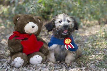 puppy love: Amor adolescente con el amigo animal de peluche