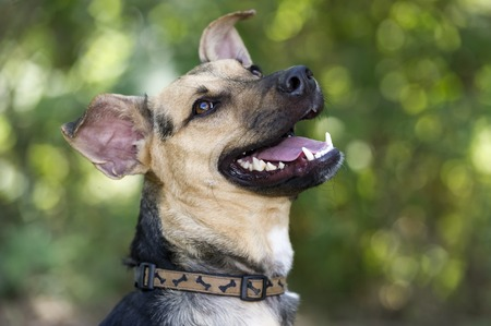 Happy dog is laughing looking up outdoors. Stock Photo