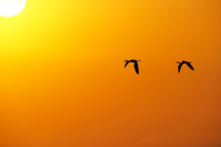 Birds flying silhouetted against an orange sky with the sun over head.