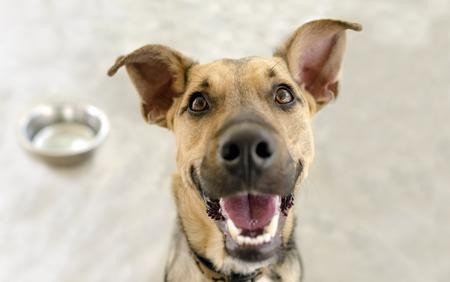 Ciotola felice del cane è un cane affamato e felice affamato molto felice che chiede di avere il suo pasto