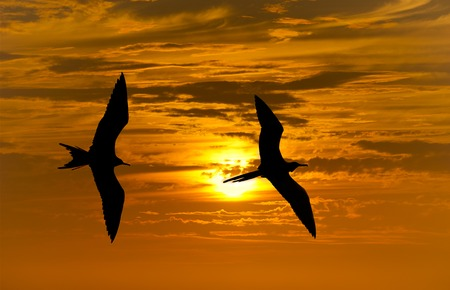 Two birds flying silhouette with a clowing beautiful orange and yellow sunset beaming in the background