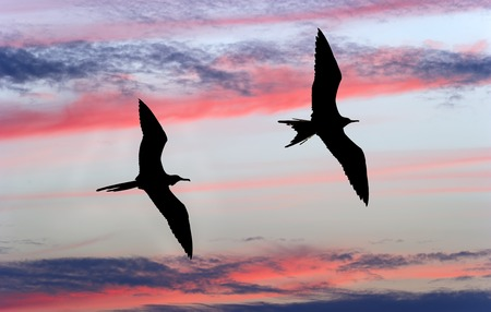 Two birds flying silhouetted against a blue sky with vibrant colorful pink and grey clouds. Stockfoto