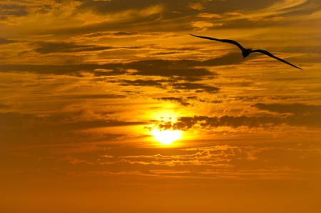 Bird flying silhouette with an orange and yellow sunset beaming in the background