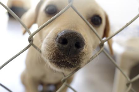 호기심 강아지 코 울타리는 울타리에 구멍을 통해 코를 파고 귀여운 강아지입니다.