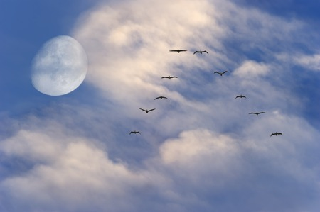 spirtual: Moon clouds birds flying is a large three quarter moon sitting behind white fluffy clouds and a blue sky with a flock of birds flying by. Stock Photo