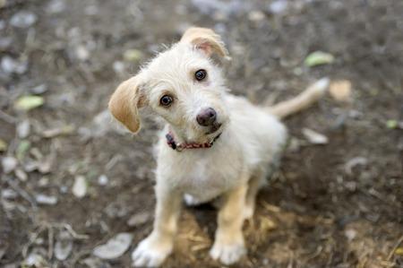 Zvědavý pes se dívá s úžasem ve svém krásném magnetických očí.