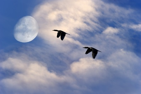 spiritual journey: Birds flying silhouette moon is two birds soaring to the moon with a rich vibrant white cloudscape and blue sky background. Stock Photo