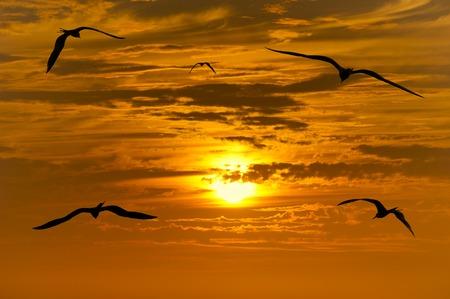 pajaros volando: Aves silueta volar es una peque�a bandada de p�jaros volando en silueta contra un hermoso celaje de naranja y el establecimiento de sol. Foto de archivo