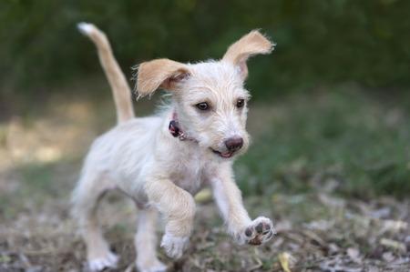 perro corriendo: Lacayo lindo es un perrito que despide adorble correr y jugar al aire libre con mucha diversi�n.
