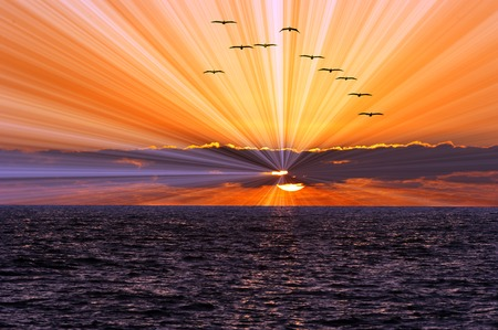 flying bird: Sun ray ocean sunset is a bright burst of sun rays shooting out from behind the clouds as a flock of birds flies over head.