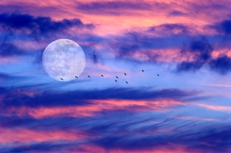 heaven background: Moon clouds birds is a soft beautiful cloudscape over a blue sky with a silhouetted flock of birds flying by as a bright full moon rises in the evening sky.