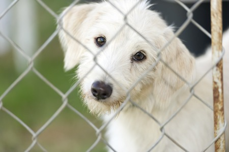 animal shelter: Shelter dog is cute dog in an animal shelter poking his nose through the fence wondering who is going to take him home. Stock Photo