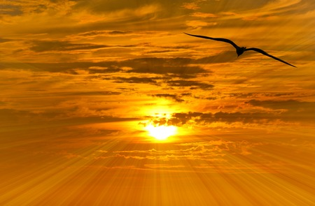 spiritual background: Bird silhouette with an orange and yellow sunset beaming in the background Stock Photo