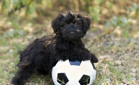 Wonderful Puppy Black Adorable Dog - 49983381-cute-dog-is-a-very-cute-black-puppy-dog-looking-as-adorable-as-a-puppy-can-look-while-resting-on-his  Trends_608448  .jpg?ver\u003d6