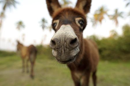 Donkey grappig is een schattige baby ezel steekt zijn neus in de camera te zien wat de heck er gaande is.